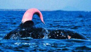 whale sperm