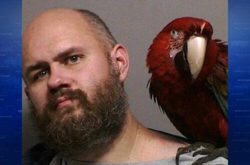 parrot mugshot