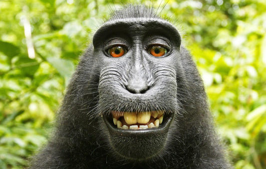 Naruto monkey selfie